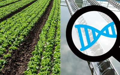 How DNA tech is used to optimize a Biological Nutrient Removal (BNR) process