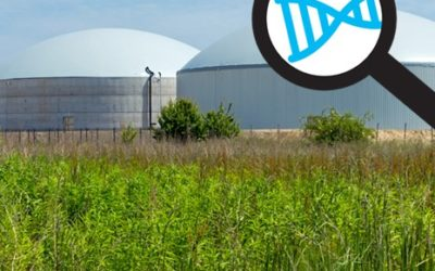 DNA-based performance comparison of anaerobic digesters