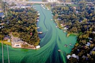 WWTP saves $35m with Low DO, 1-step nitrification/de-nitrification